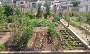 Imatge de Oberta la convocatòria per a optar als horts ecològics de l'Era de Cal Marquès 2