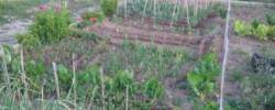 Imatge de Llistat provisional de persones admeses i excloses per a participar en el sorteig de les parcel·les d'horts ecològics de l'Era de Cal Marquès 7