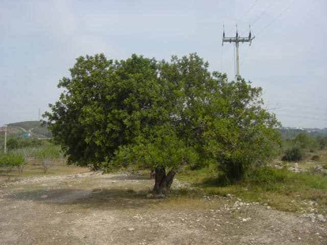 Imatge de La vegetació 10