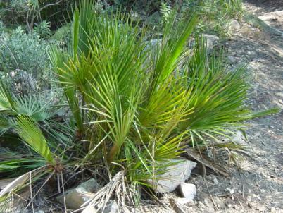 Imatge de La vegetació 12