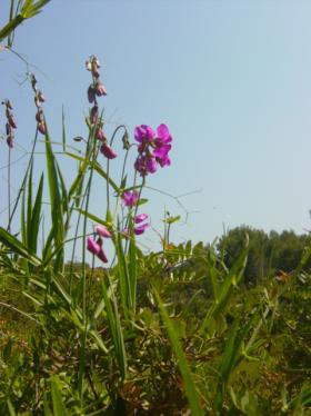 Imatge de La vegetació 14