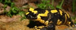 Imatge de Exposició Fauna del Garraf: amfibis i rèptils 4