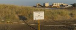 Imatge de Dimarts 9 de juliol comencen els treballs de neteja de la zona dunar 1