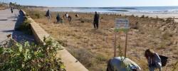Imatge de Segona jornada de voluntariat per protegir la zona dunar 10