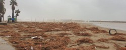 Imatge de Continuen les tasques de neteja a les platges 4