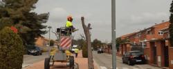 Imatge de Es retira arbrat viari que provoca l'aixecament de les voreres 12