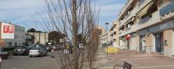 Imatge de Comencen a plantar-se els arbres a l'Av Barcelona i a la Crta de Cunit a Clariana 9