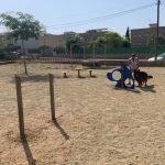 Read more about the article Ja està operatiu el Parc Caní de Plademar